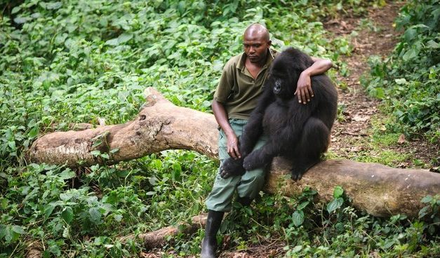 Man Comforts Gorilla Who Lost His Mother