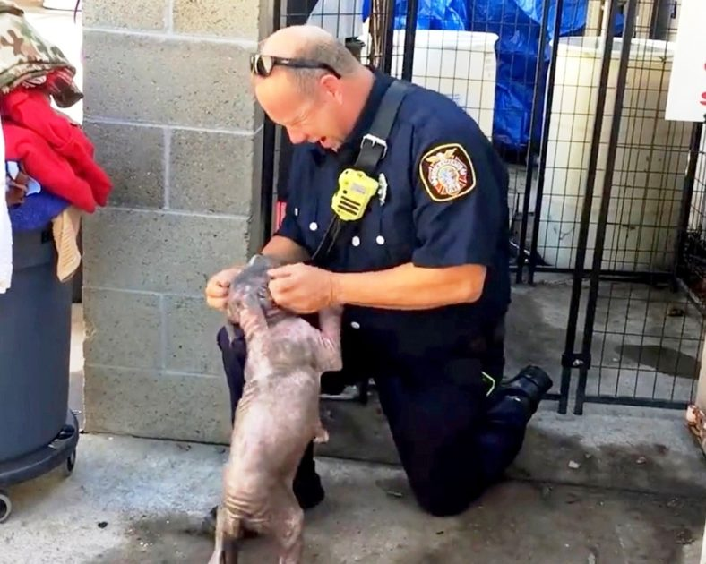 Fireman rescues abused puppy and is happy to see her| Pawsitive Club
