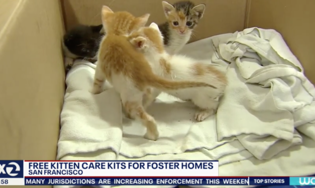 SF Animal Care Is Offering Free Kitten Care For Everyone Who Adopts Stray Kittens