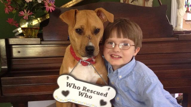 Strong Bond Between Emaciated Dog And Autistic Boy Saves Both Of Them