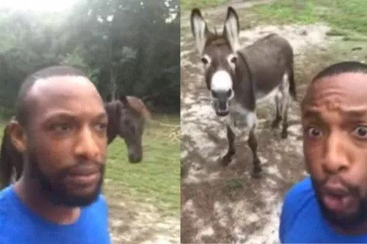 Man Goes Viral After Singing 'Lion King' Song With His Donkey