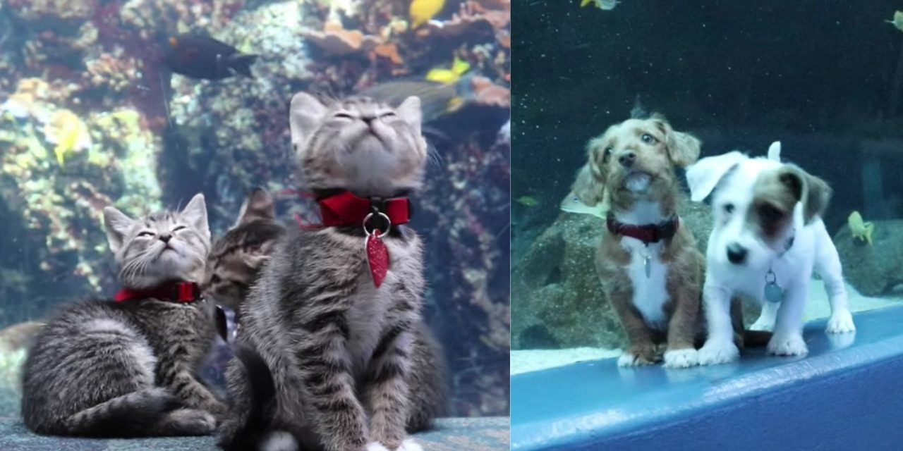 Cute Kittens and Puppies Take Over an Empty Aquarium, And It's Magical
