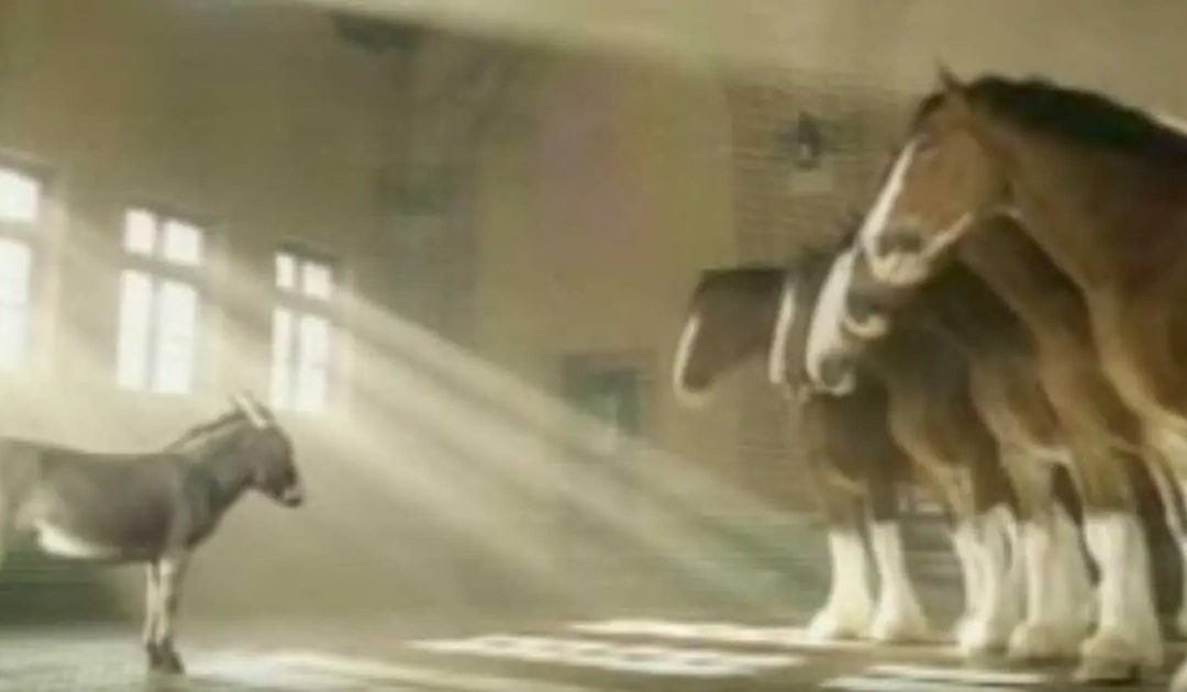 Tiny Donkey Wants To Be A Clydesdale, Explains Why In An Adorable Video