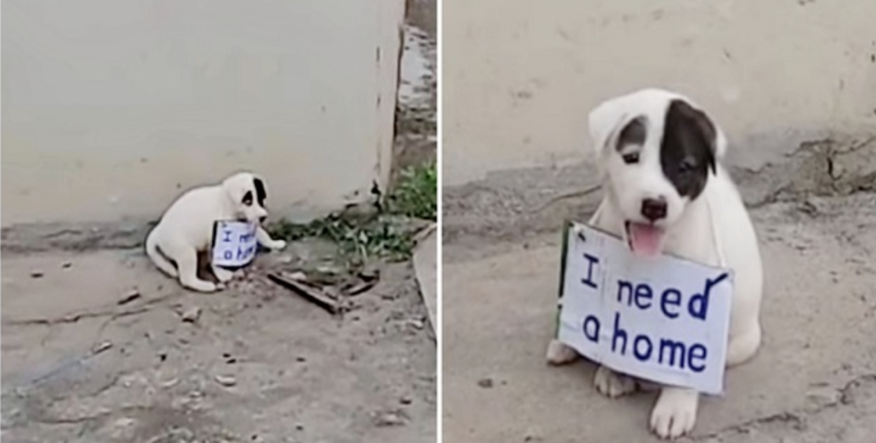 Vulnerable Puppy Alone on Vacant Street With a Sign On His Little Neck