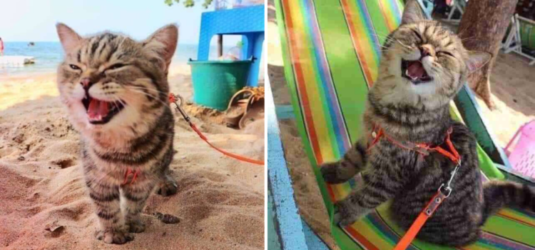 Kitten Goes To The Beach For The First Time And Can't Stop Smiling
