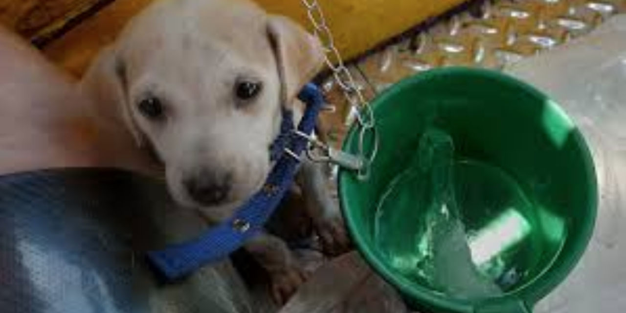Tricycle Driver Gives His Pet Puppy an Expirience of a Lifetime