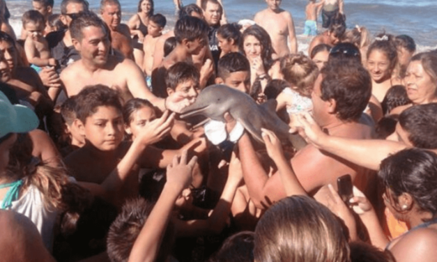 Baby Dolphin Dies After Heartless Tourists Pass It Around Just To Take Pictures With It