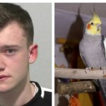Teen Who Stabbed Pet Cockatiel With Knife Told Police 'It's Just a Bird'