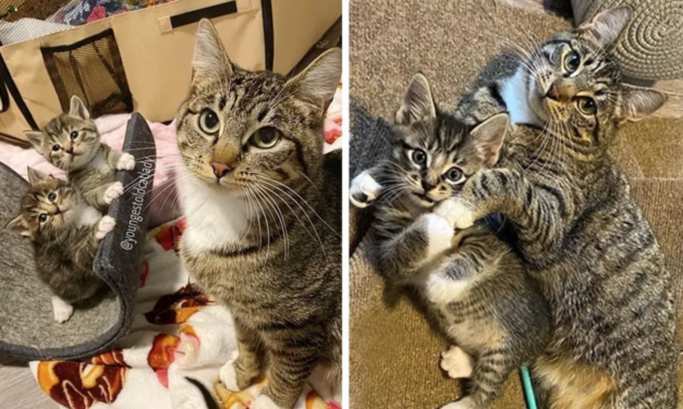 Stray Cat Wanders into Family's Home to Have Kittens and It Changes Her Life Forever