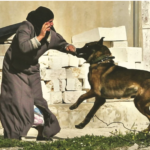 Dog Shows Ultimate Sacrifice And Saves Hundreds By Attacking Suicide Bomber At Wedding