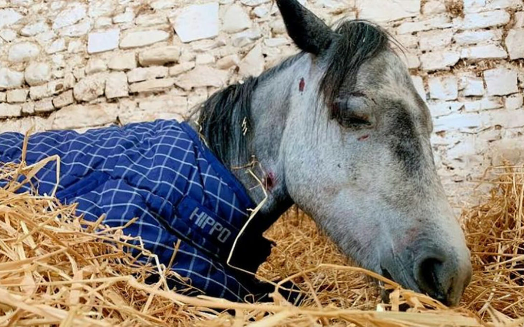 "Pony Dies After Teenagers Beat Her And Leave Her In ""Horrendous Condition"""