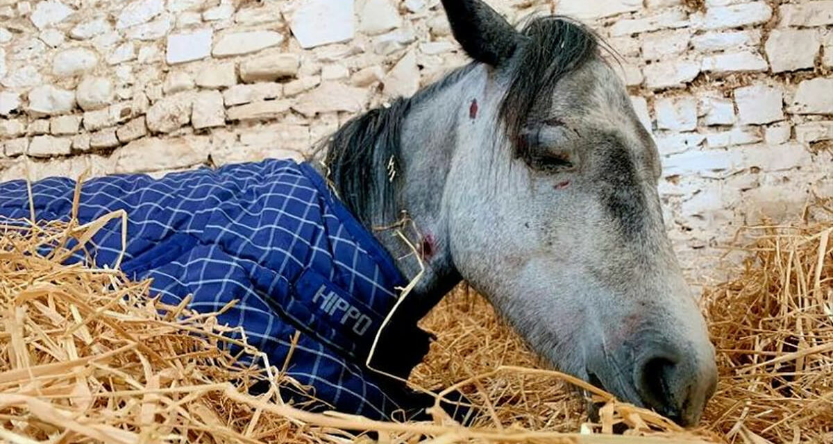 """Pony Dies After Teenagers Beat Her And Leave Her In """"Horrendous Condition"""""""