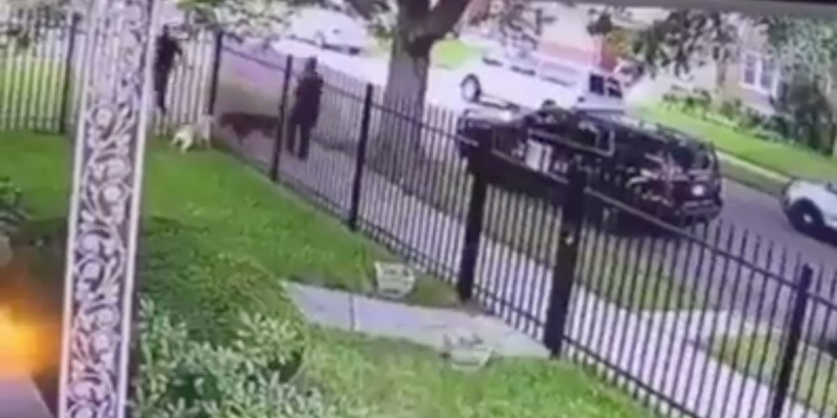 Detroit Police Defends Officer Who Fatally Shot A Dog In Its Own Garden