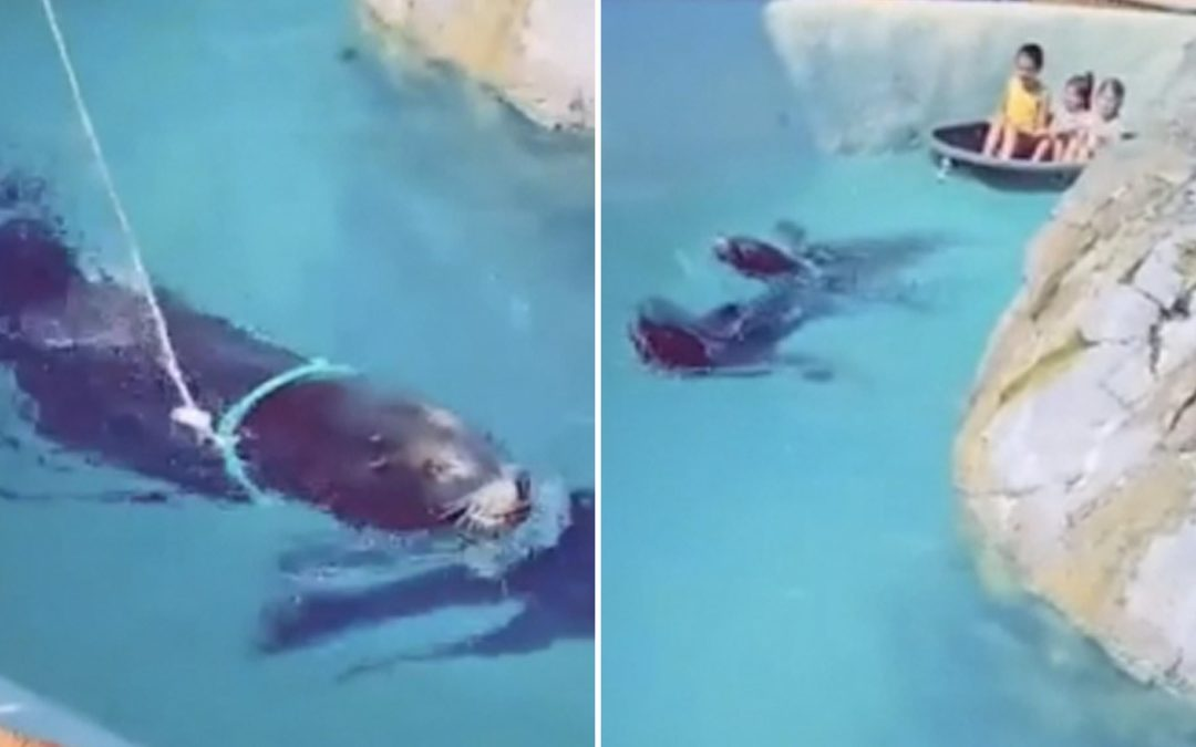 Seal Forced To Tow Children In Boat With Rope Tied Around Its Neck