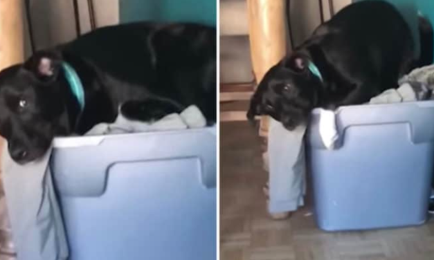 Dog Sits In A Pile Of His Military Owner's Clothes