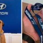 Stray Dog Visits A Hyundai Dealership And Got A Job