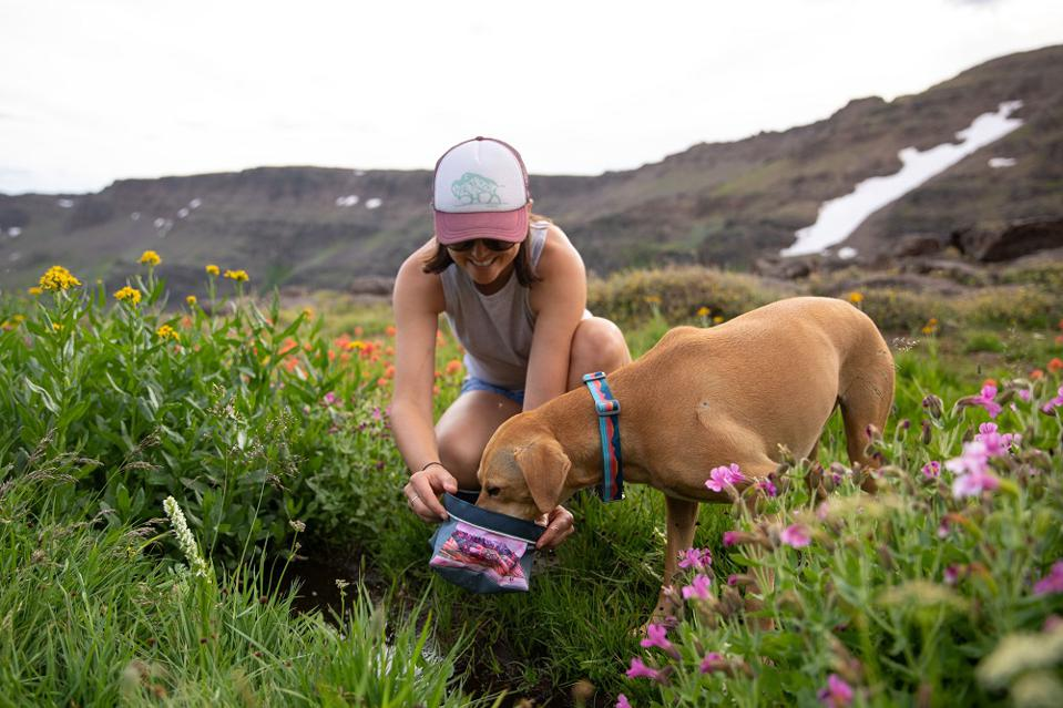 Wanna Go Hiking With Your Dog? Here's What Gear You'll Need