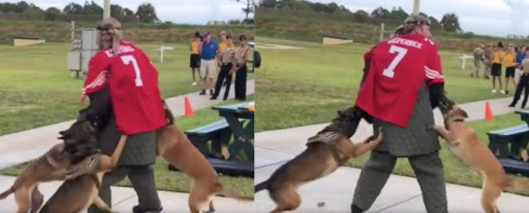 An Investigation Has Been Launched After Video Shows Military Dogs Attacking Colin Kaepernick's Stand-In