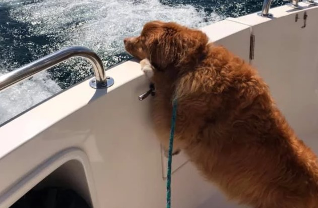 Dog Found Swimming Alone in Lake Michigan Finally Reunited With Owners
