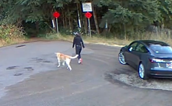 Video Shows Woman Abandoning Her Dog at Park, Pup Ends Up In Shelter