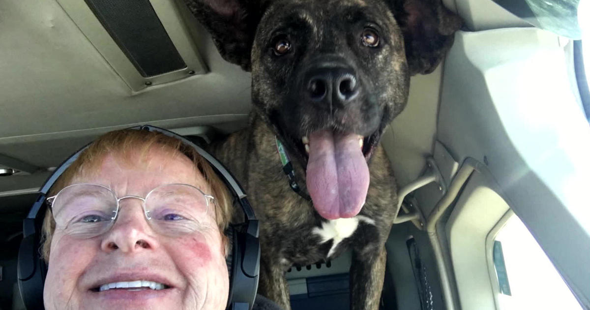 Flying dogs to their forever homes