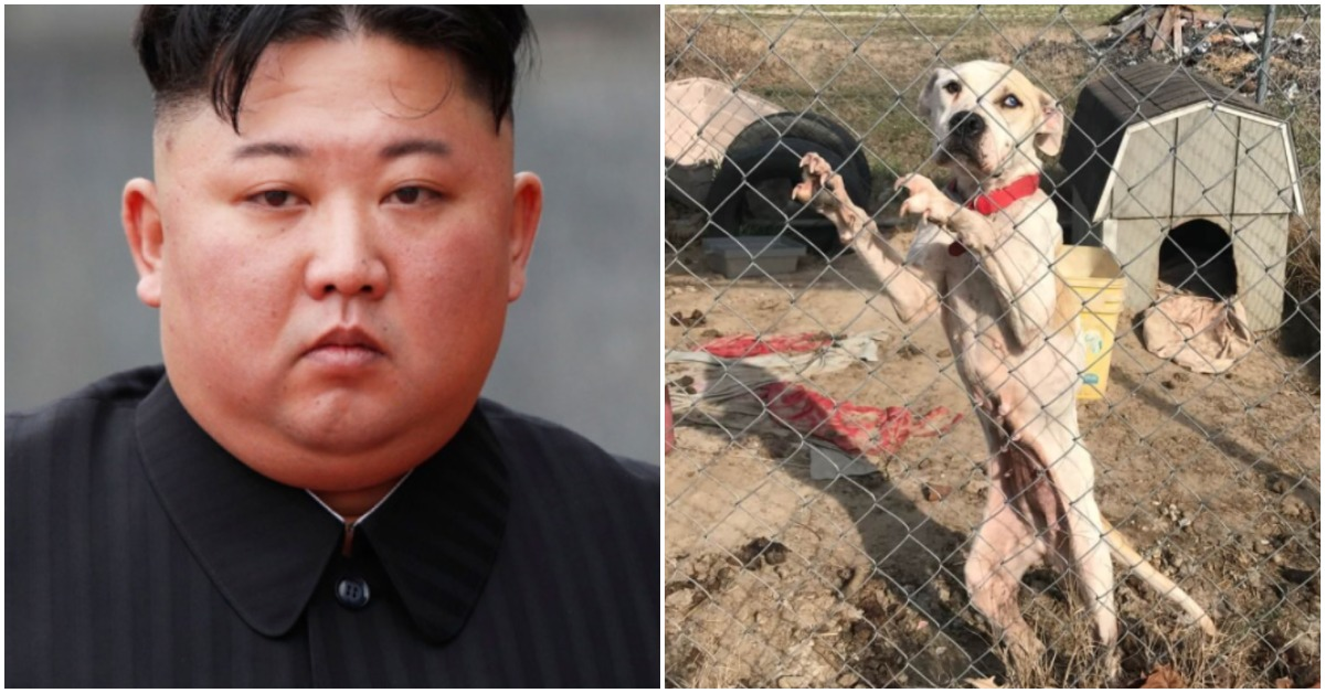 North Korea Government Orders Pet Dogs To Be Seized From Owners During Food Shortages