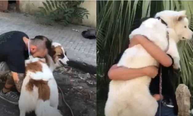 Charity Animals Lebanon Is Leading Search Teams To Find Pets Lost In The Deadly Explosion And Reunite Them With Their Owners