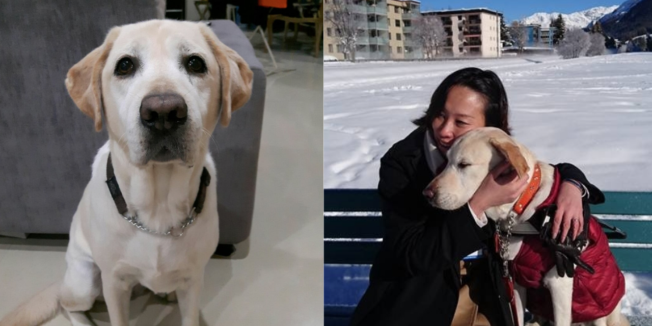 S'pore guide dog, Esme, dies at age of 10