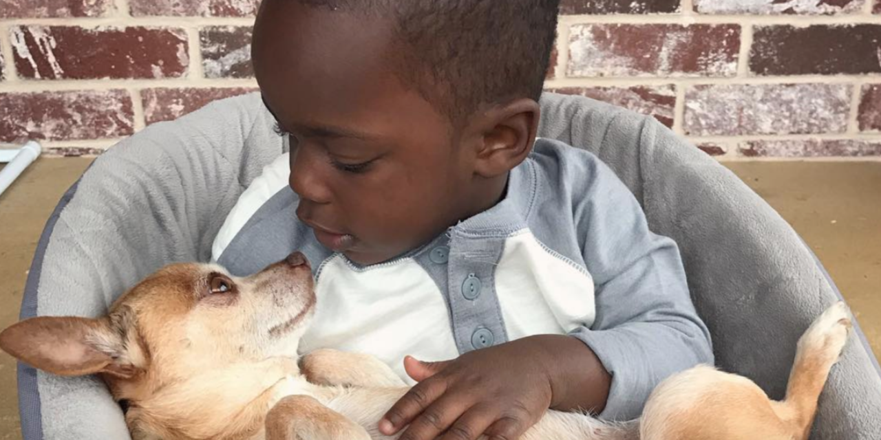 Little Boy And His 13-Year-Old Chihuahua Do Everything Together