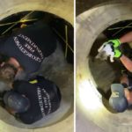 Firefighter Saves A Kitten Flushed Out Of A Storm Drain