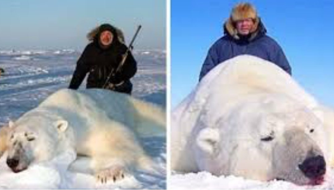 Trophy Hunters Pose With Dead Polar Bears As Companies Offer Hunting Trips for $44,000