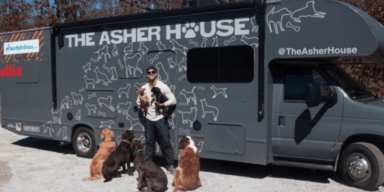 Man Decided To Quit His Job In Order To Travel The Country And Save Shelter Dogs