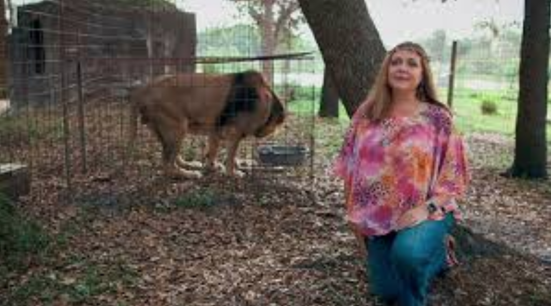 Big Cat Rescue CEO Carole Baskin Joins 'Dancing With The Stars'