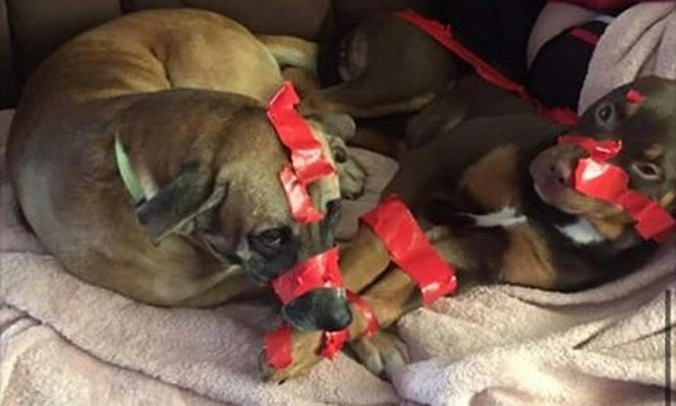 A Man Taped Up His Two Dogs And Bragged About It On Facebook