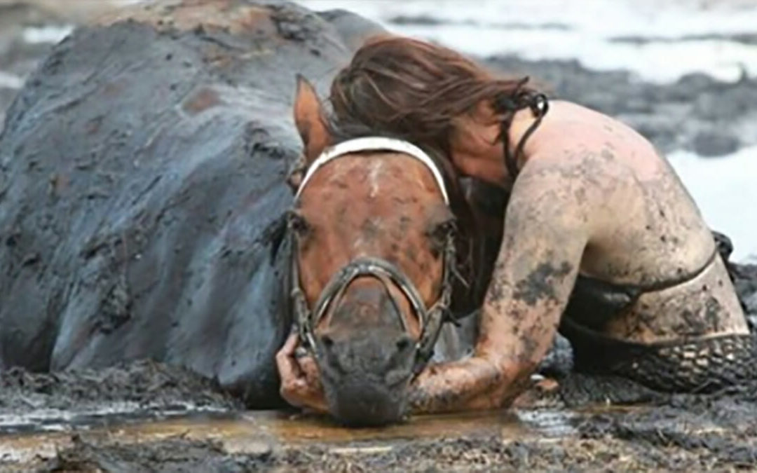 A Horse Gets Stuck In Mud And His Owner Hold On To Him For Three Hours
