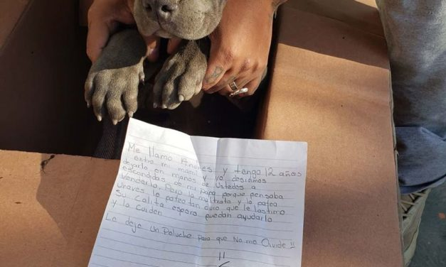 Baby Pit Bull Left Alone With a Heartbreaking Note