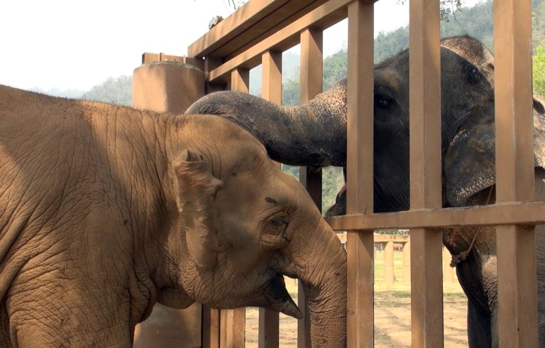 Blind Circus Elephant Finally Gets Its Happily Ever After
