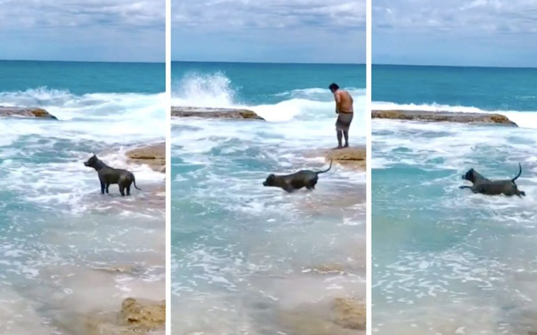 Dog panics when he can't see Dad, fearlessly leaps into ocean to find him