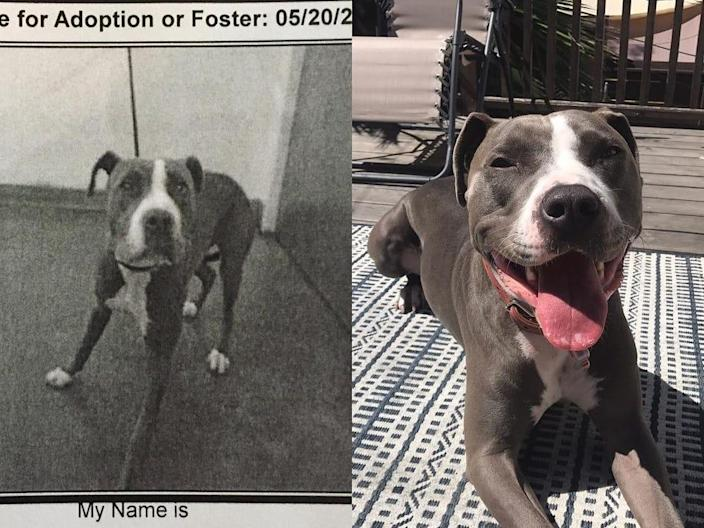 Before-And-After Photos Show The Transformations of Dogs Who Were Adopted