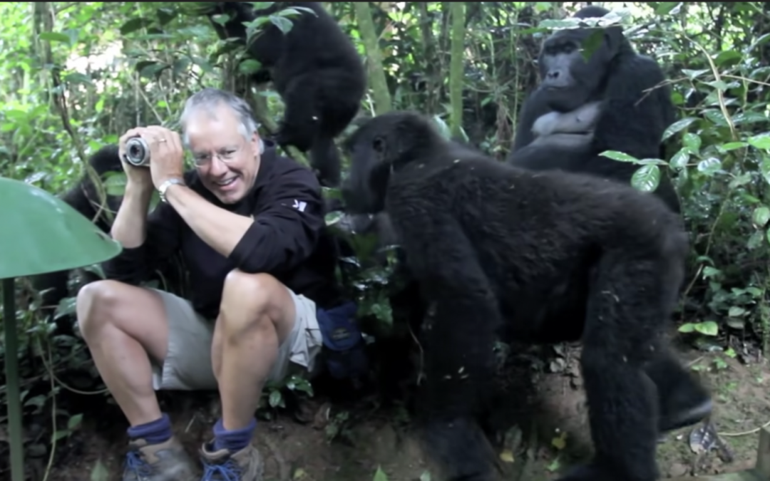 Man Has Once-In-A-Lifetime Experience With a Family Of Wild Mountain Gorillas
