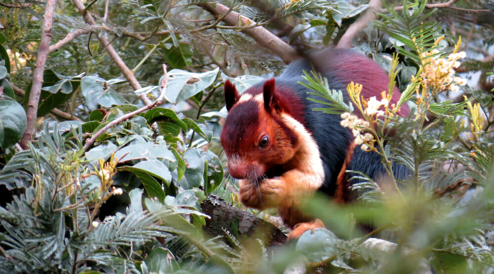 This Colorful Squirrel Is Unlike Anything You've Seen