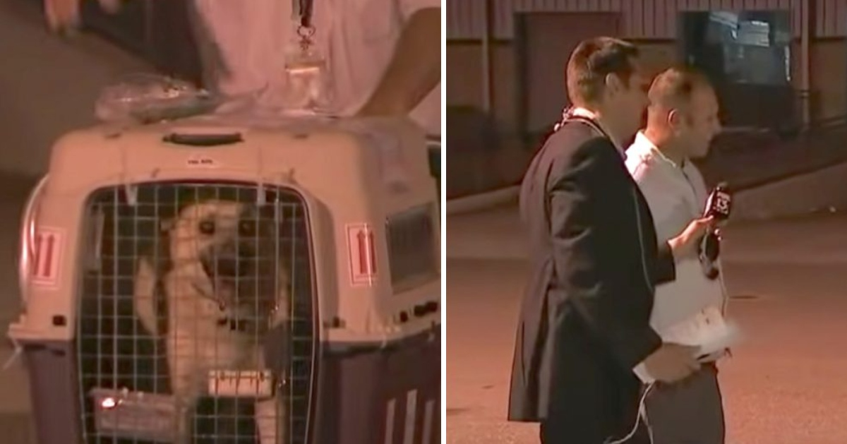 Dog Is Reunited With The Soldier Who Saved Her Overseas On Live TV