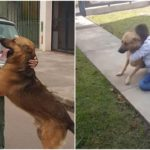 Boy Emotionally Reunites With His Missing Dog After Eight Months