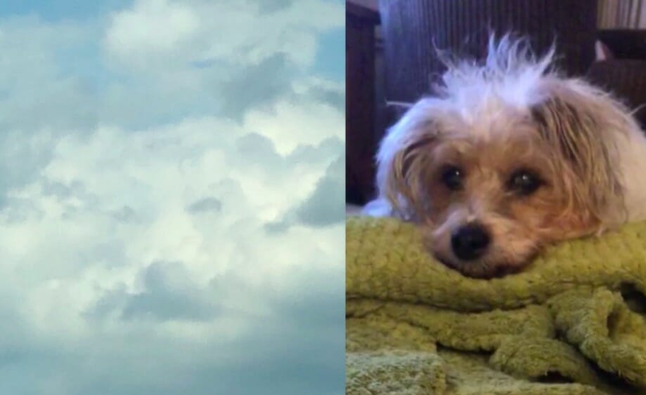 Clouds reveal the face of a dog that passed away shortly before