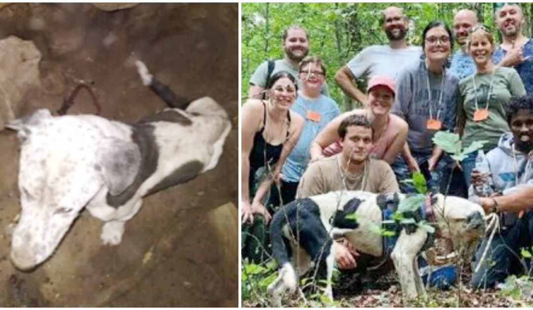 Dog Gets Saved From A 30-Foot Pit
