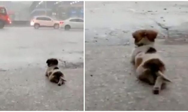 Viral Video: Dog Enjoys Watching The Rain