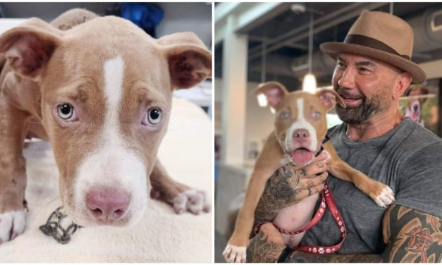 Actor Dave Bautista offers $5,000 to find the man who mistreated the puppy he adopted