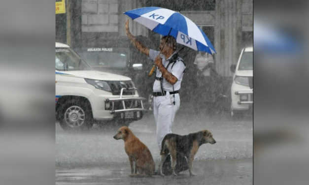 Officer goes viral for sharing his umbrella with stray dogs during heavy rain