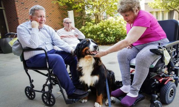 Residential Therapy Dog Helps Mercy's Hallmar Residents Feel At Home